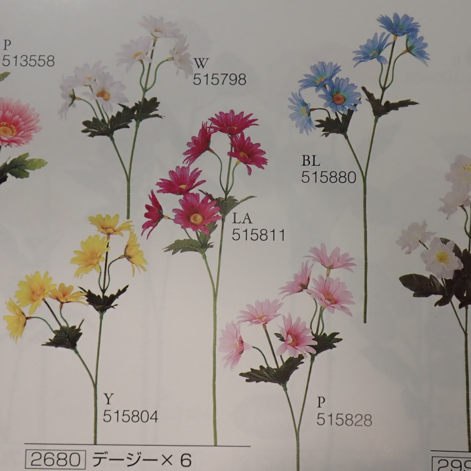 デージー×6(花径6cm・単色48本入り)2680