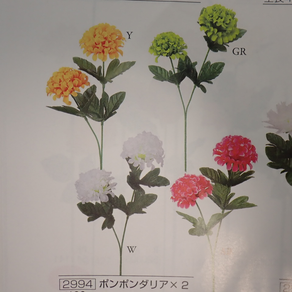 ボンボンダリア×2(花径8cm・単色48本入り)2994