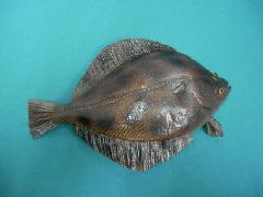 食品ディスプレイ魚(カレイ)[コンビニ後払い場合有り]]