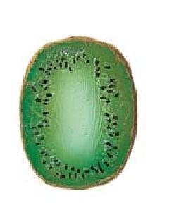 食品サンプルカット(キーウィハーフ)DIFV7956