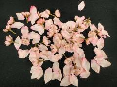 桜花びらセット(約120枚入り)