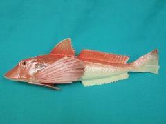 魚ディスプレイ(ホウボウ・25cm)DIFI7543