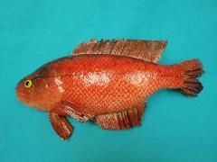 魚ディスプレイ(アカウオ・25cm)DIFI7931