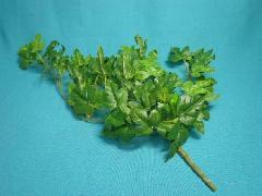 在庫処分造花�F(ニューアイビーバインブッシュ(小)全長42cm