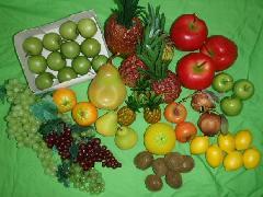 在庫処分食品サンプル(果物セット)17種40個セット