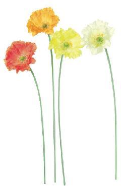 ブライダル用造花(アイスランドポピー・クリーム・花径10cm)FLS5022