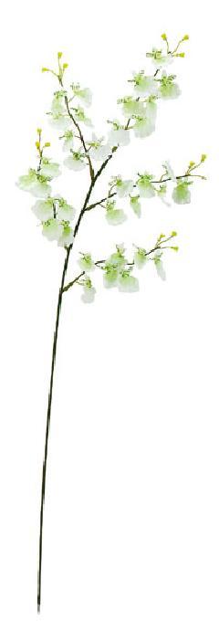 ブライダル用造花(オンシジューム・クリーム・花径4cm)FLS619