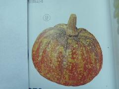 110mmパンプキン(オレンジ)フォーム製DIFV7879