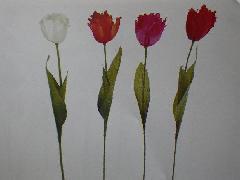 サテンチューリップ×1(花径6cm・単色48本入り)MY5418