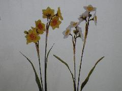 日本水仙(花径5cm・単色48本入り)MY5528W