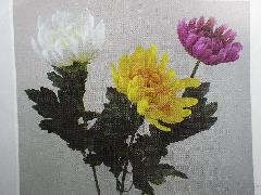 日本菊(花径9cm・単色48本入り)TK3198W