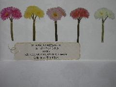 卸販売フラワーバンドル(ニューガーベラ3輪花径6,5cm・24本)YK4068
