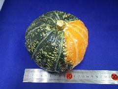 130mmパンプキン(オレンジ/グリーン)