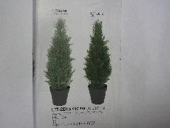 75cmコニファーツリー(フロストグリーン)「コンビニ後払い」
