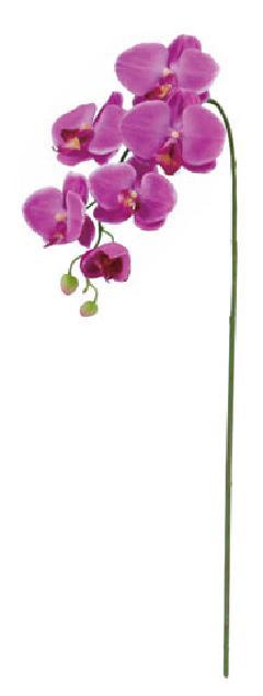胡蝶蘭(S)×6(パープル・花径4〜10cm全長75cm)FLS5183S