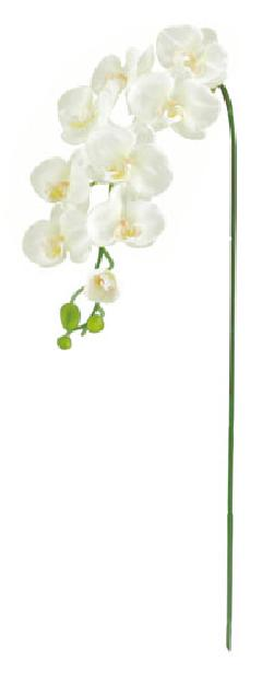 胡蝶蘭(L)×9(ホワイト・花径4〜10cm全長105cm)FLS5183L