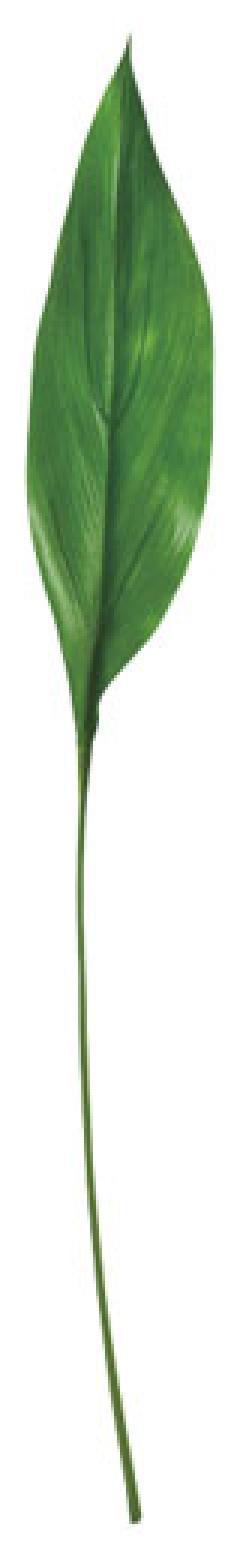 カラージュームリーフ(S・グリーン・リーフ35cm全長70cm)LES5072S