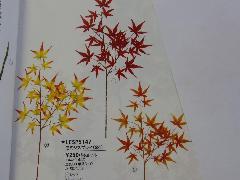 モミジスプレイ(12本・全長60cm)LESP5147