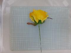 ミシェルローズピック(プレミアムイエロー)花径約8・全長約21cmFLP6014
