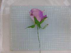 ミシェルローズピック(ラベンダー)花径約8・全長約21cmFLP6014