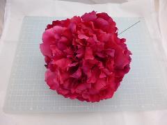 エリザベスピオニーピック(ビューティー)花径約17・全長約22cmFLP6016