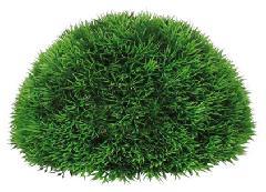 ハーフボール25cm(グリーングラス)LEE7020L