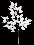 白い枝ウィンターバーチリーフ枝(S)ホワイト・69cmLES5086