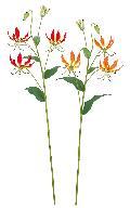 グロリオサ(オレンジ花径9cm全長82cm)FLS5282