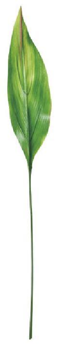 カラージュームリーフ(S・グリーン/レッド・リーフ35cm全長70cm)LES5072S