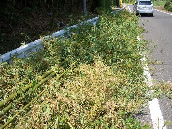 勝浦市の竹伐採