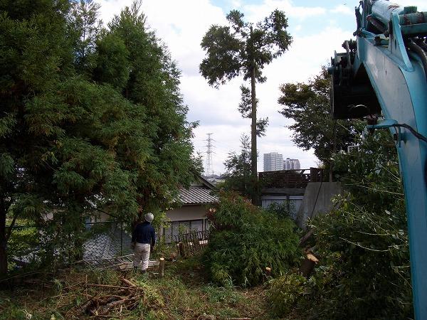 栗の庭木伐採