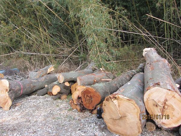 住宅柱用原木