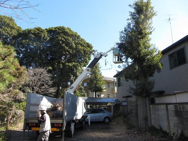 東京都目黒区で8mの植木を剪定