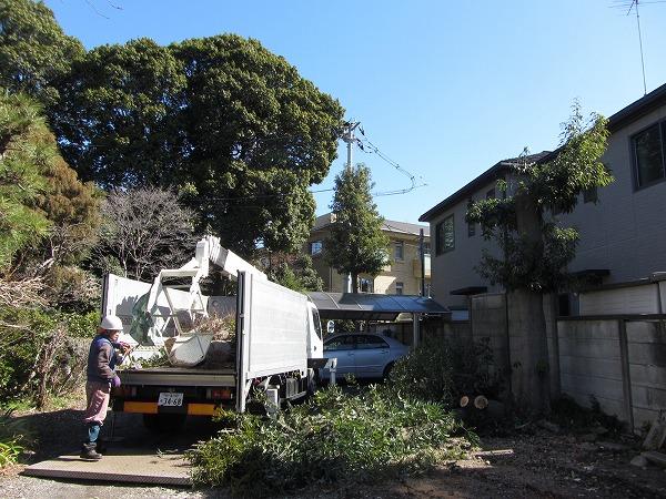 道が狭い東京目黒区の椎の木を伐採!