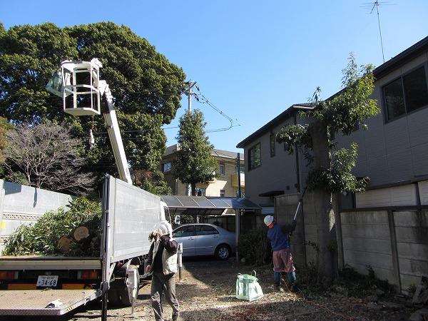 高さ5m位の古木