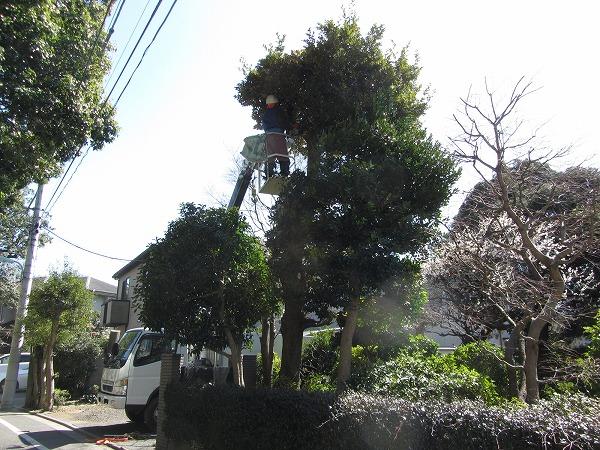 東京都大田区で植木剪定作業を実施!交通量の多い道もOK!