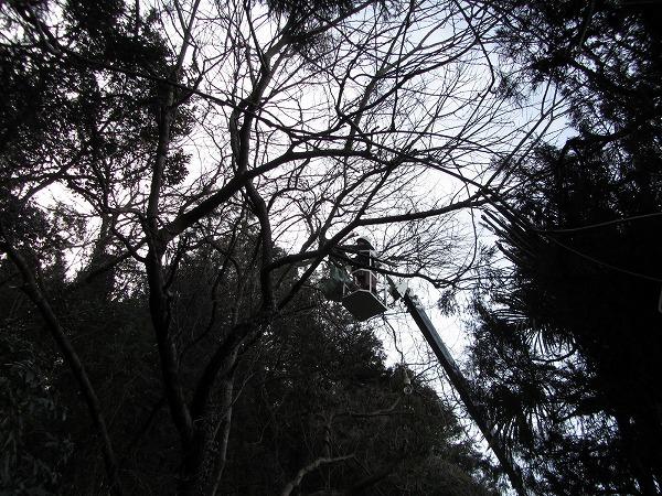千葉県八千代市の住宅の雑木伐採事例