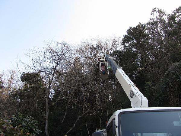 雑木の伐採