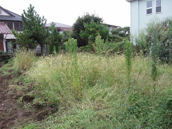 千葉県千葉市で1m以上の草の草刈工事を行いました