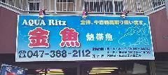 松戸市・金魚、熱帯魚ショップ 壁面看板