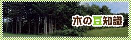 木の豆知識