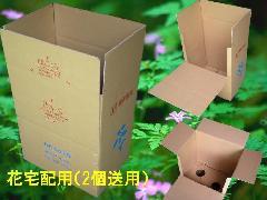鉢もの植物宅配用(2個送用)