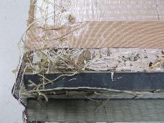 賃貸マンションの畳