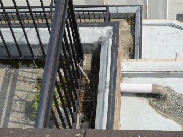 排水溝の掃除