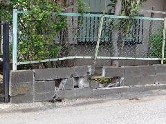 ブロック塀交換補修工事