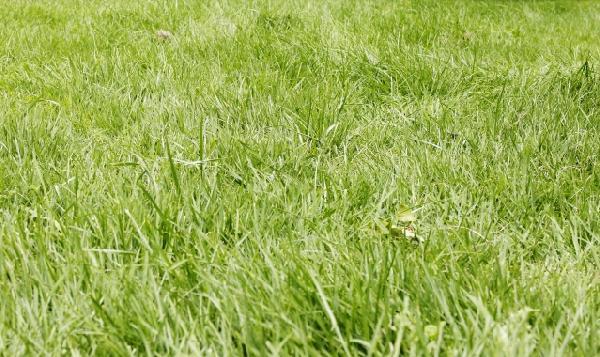 除草、伐採作業