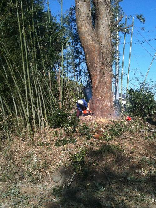 樹木伐採/山梨