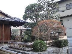 茶室前の庭