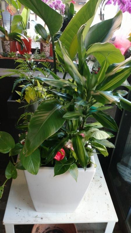寄せ植え観葉植物
