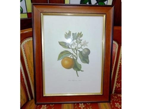 イタリア製 輸入小物 壁掛け用額絵162933-4